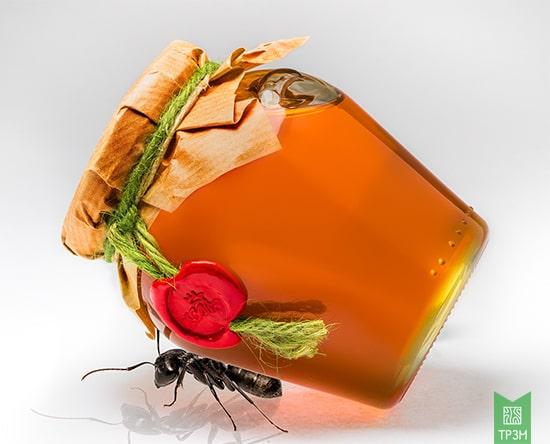 cách bảo quản mật ong tránh kiến bu